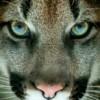 Puma Avatar