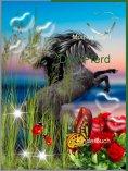 eBook: Das Pferd
