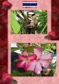 eBook: Thai Blumen und Pfanzen Photobuch von Heinz Duthel