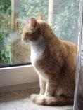 ebook: Zwei Katzen erzählen aus Ihrem Leben in Ostfriesland