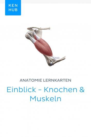 Kenhub: Anatomie Lernkarten: Einblick - Knochen & Muskeln - als ...